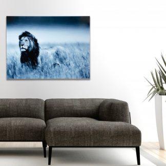 Obraz Lion King 60x80cm Löwe sklo