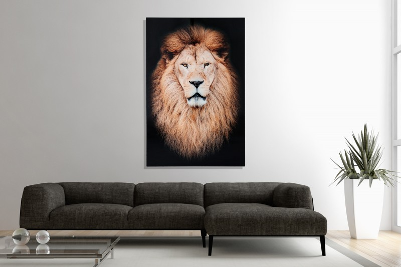 Obraz Mufasa 80x120cm Löwe sklo
