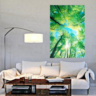 Obraz Woods 80x120cm sklo